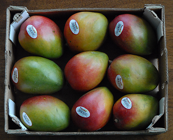 How To Store A Mango Mangoes The Right Way Mango Maven